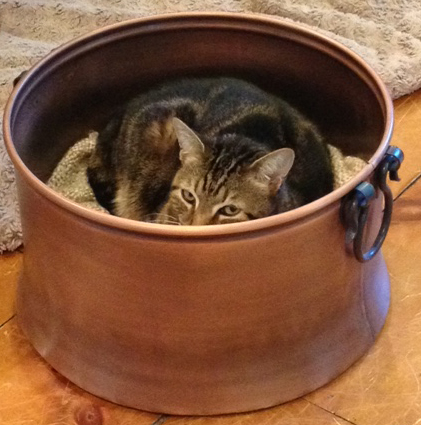 Ringo-in-a-bucket-r