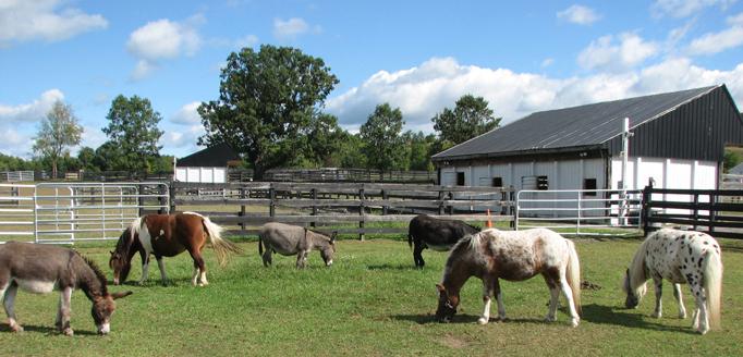 Pony Hill
