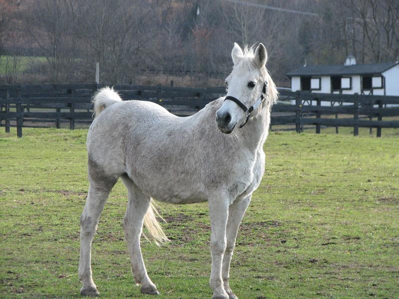 Charlie Horse - In Loving Memory