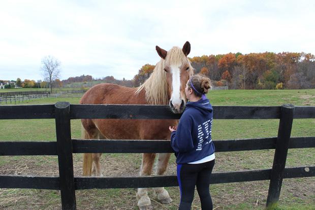 Volunteer meeting horse