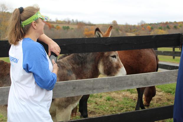 Volunteer meets equines