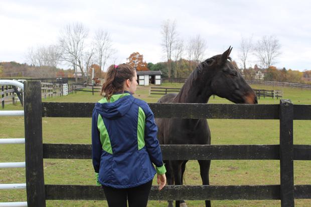 Volunteer with brown horse