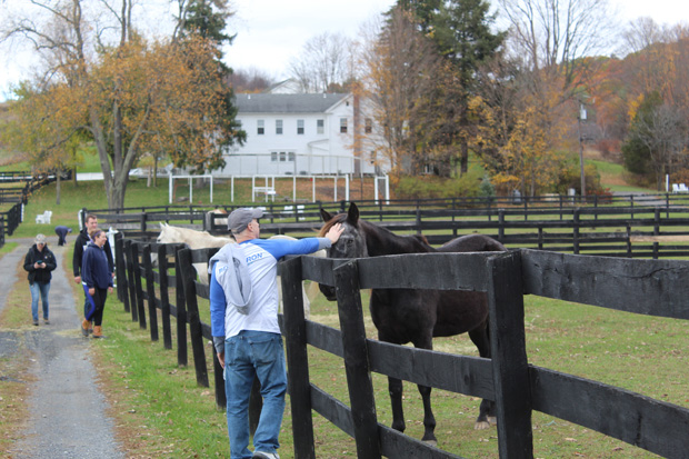 Volunteer and horse