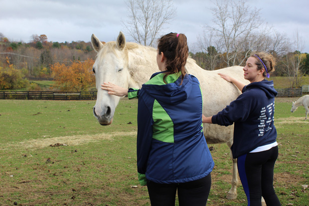 Two volunteers petting white horse