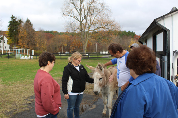 Volunteers with a donkey