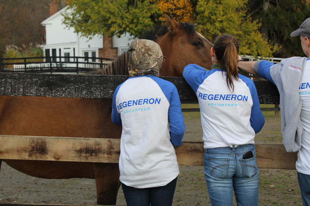Two volunteers with brown horse