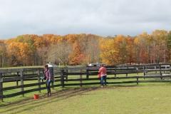 Volunteers paint fence