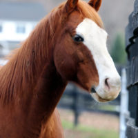 Resident Equine Care Manager
