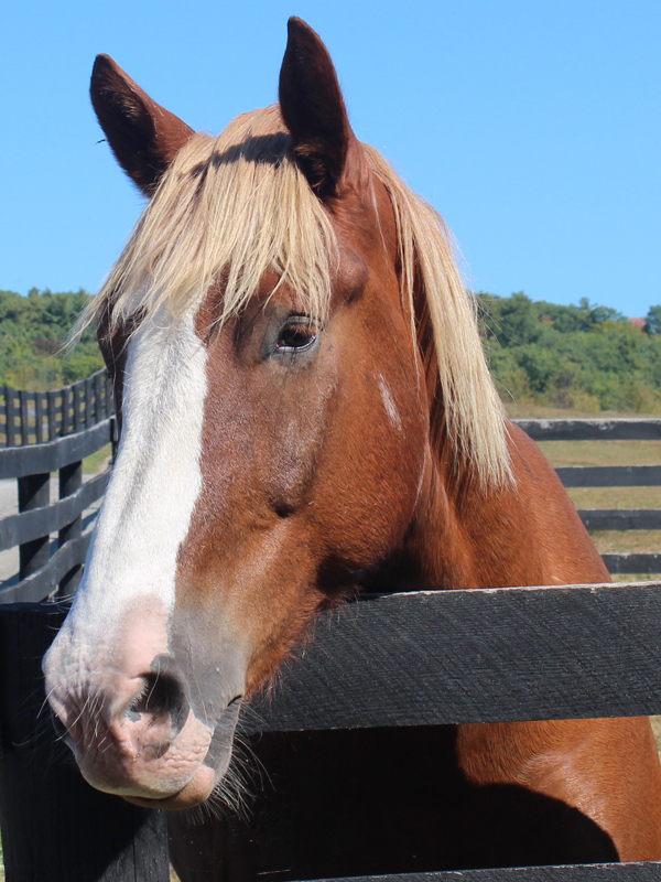 Horse at Equine Advocates