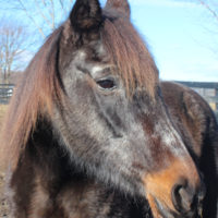 Resident Equine Care Assistant Manager