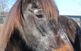 Horse at Equine Advocates