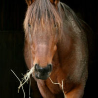 The Troubled History of Horse Meat in America by Susanna Forrest