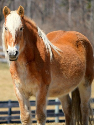 PMU Mare at Equine Advocates