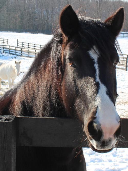 Rescued Horse at Equine Advocates