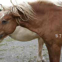 What Do Horse Urine (PMU) and Breast Cancer Have in Common?
