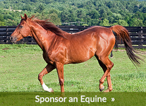 Donate to Equine Advocates
