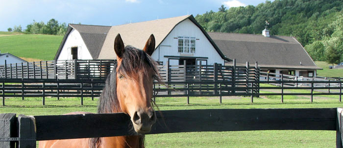 Join Mailing List for Equine Advocates