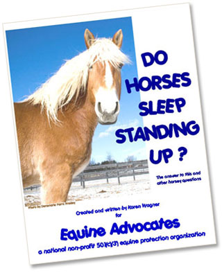 Do Horses Sleep Standing Up?