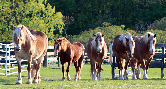 Equine Advocates Planned Giving
