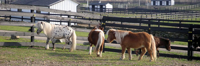 Equine Advocates Resources
