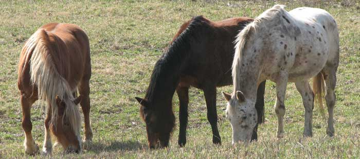 Take Action Against Horse Slaughter