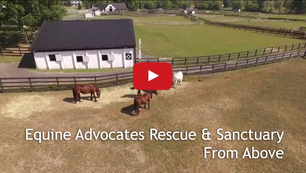 Watch Equine Advocates from Above