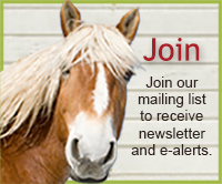 Equine Advocates Mailing List