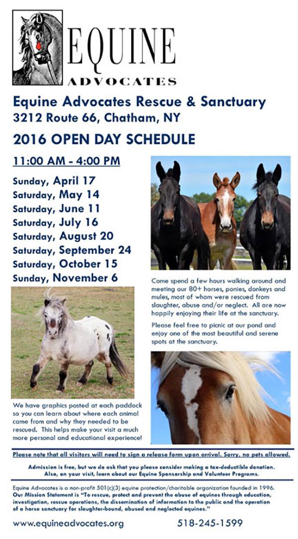Public Open Days  Equine Advocates