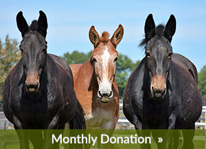 Monthly Donation to Equine Advocates