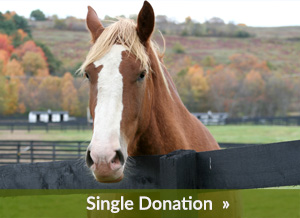 Single Donation to Equine Advocates