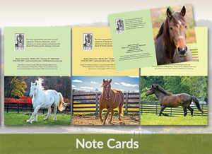 Equine Advocates Note Cards