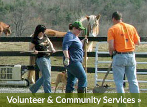 Volunteer at Equine Advocates