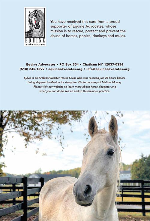 Equine Advocates Note Cards