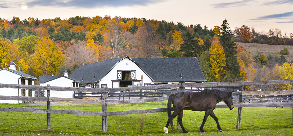 About Equine Advocates