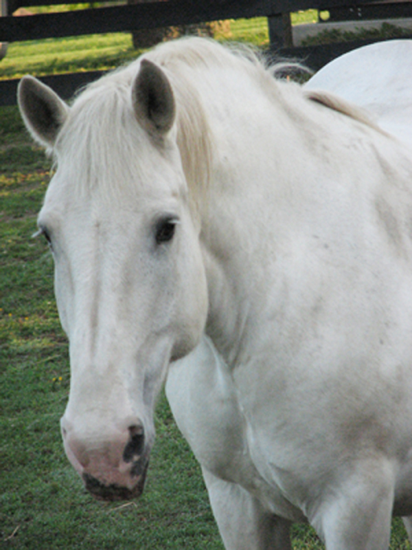 Meet Our Residents - Equine Advocates