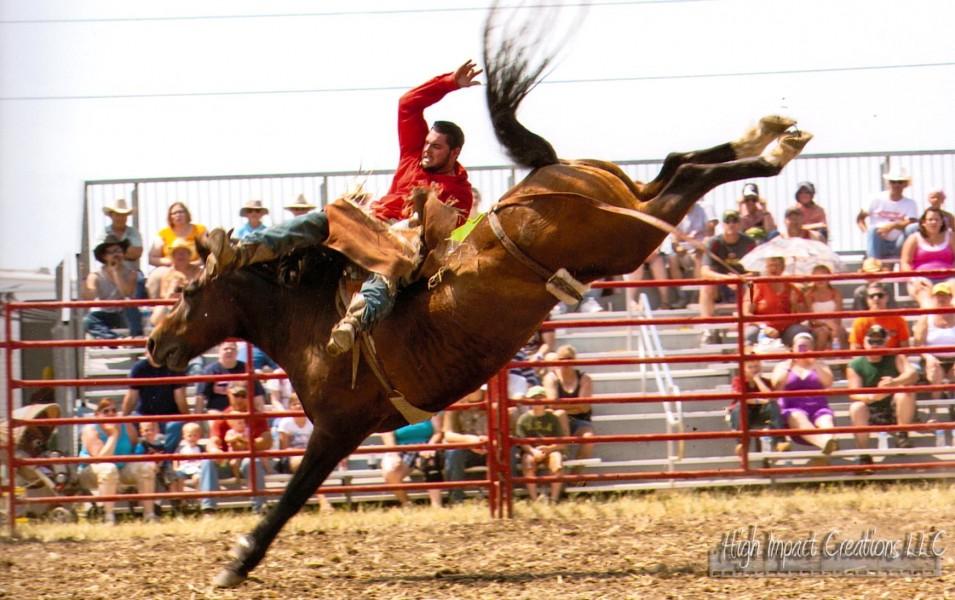Rodeo Amp Horse Soring Equine Advocates