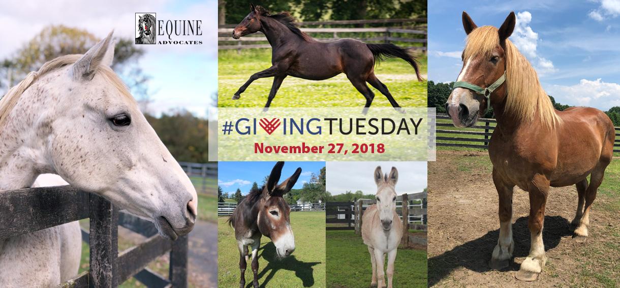 Equine Advocates Giving Tuesday