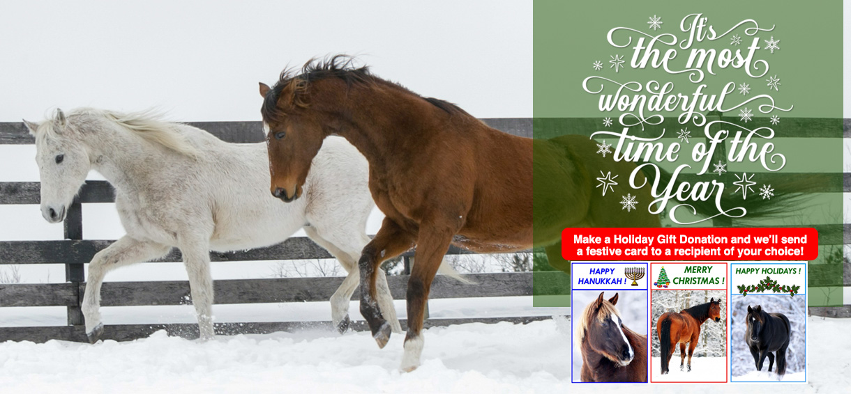 Equine Advocates - Happy Holidays