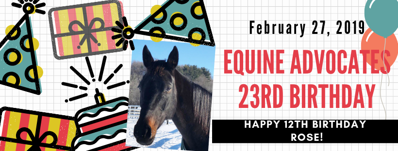 You are currently viewing Equine Advocates Celebrates 23rd Birthday!