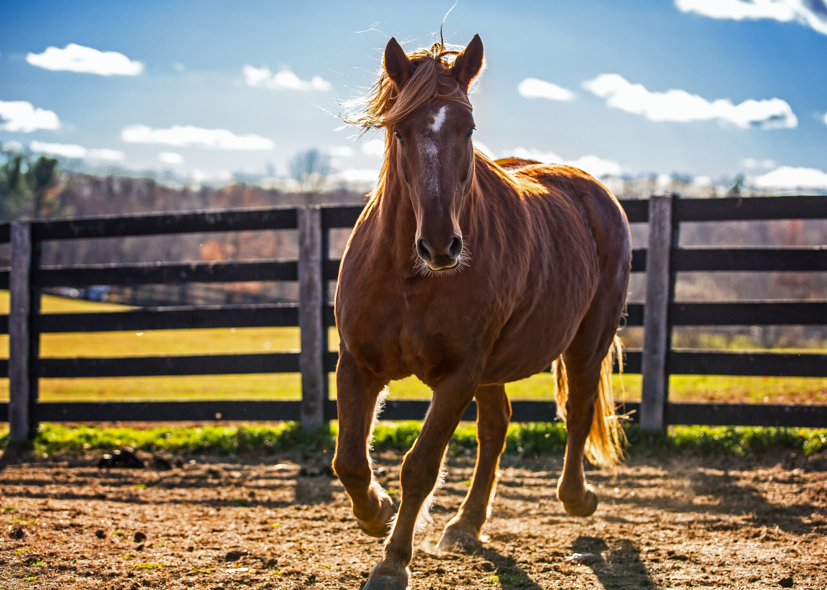 You are currently viewing Should Your Equine Exercise on an Empty Stomach?