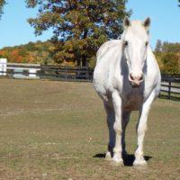 Microchip Helps Determine Equine Allergies