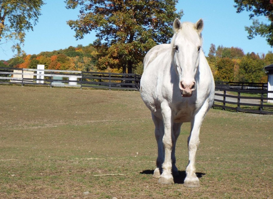 You are currently viewing Microchip Helps Determine Equine Allergies