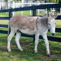 Donkeys Rule Small Town in Arizona