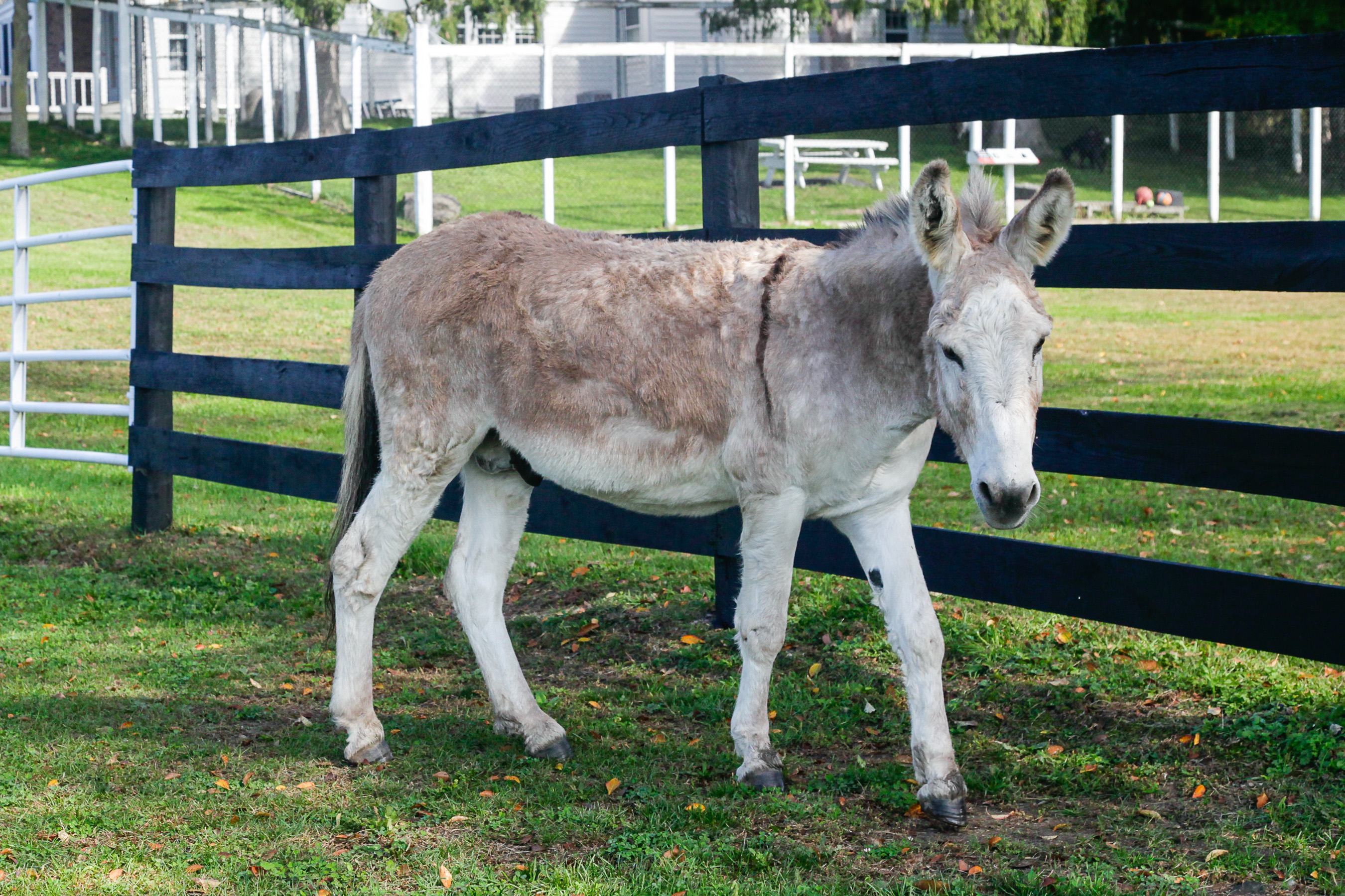 You are currently viewing Donkeys Rule Small Town in Arizona
