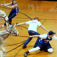 """Say NO to the Donkey Basketball """"Trend"""""""
