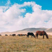 Mongolia: Where Equine Dental Care Began