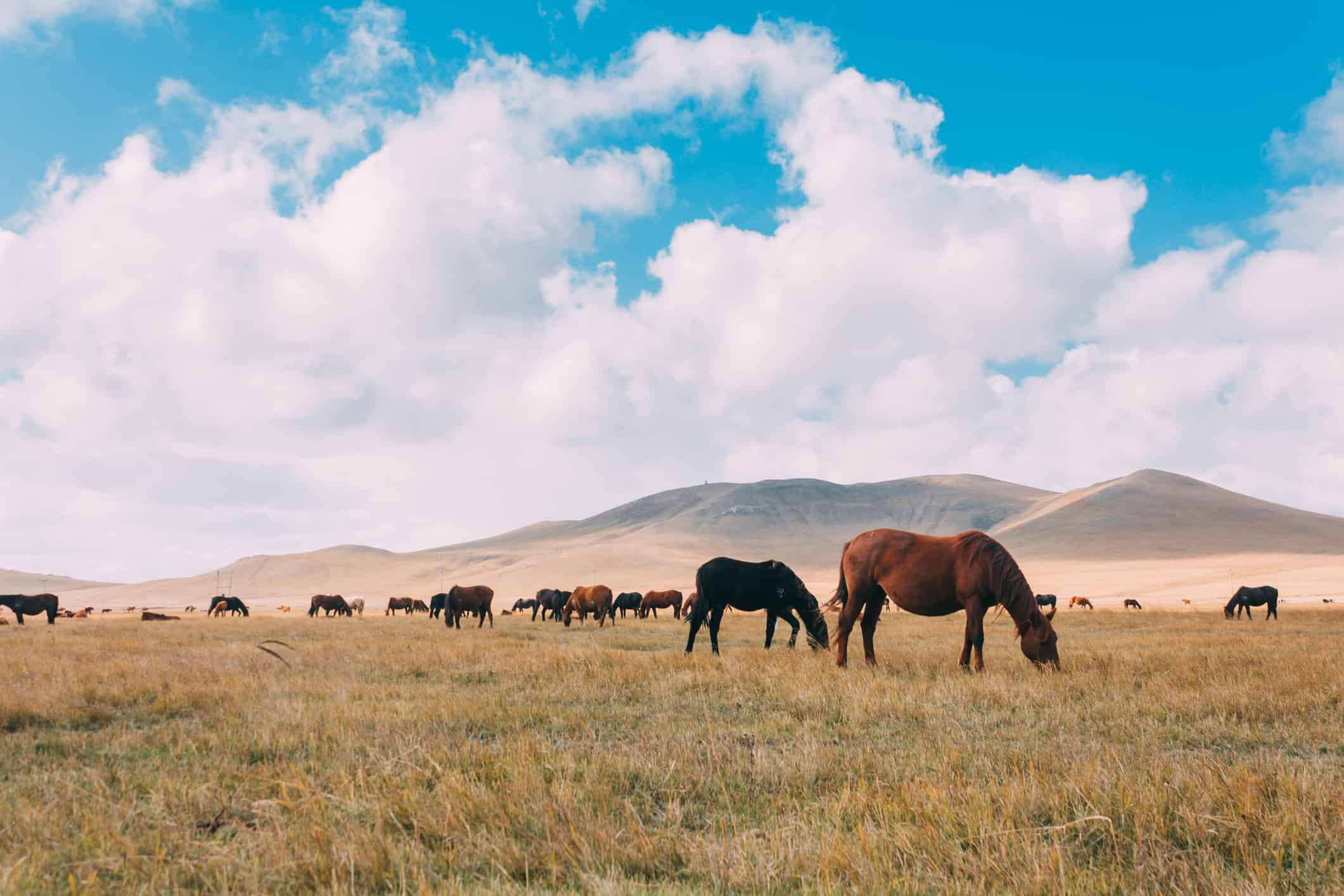 You are currently viewing Mongolia: Where Equine Dental Care Began