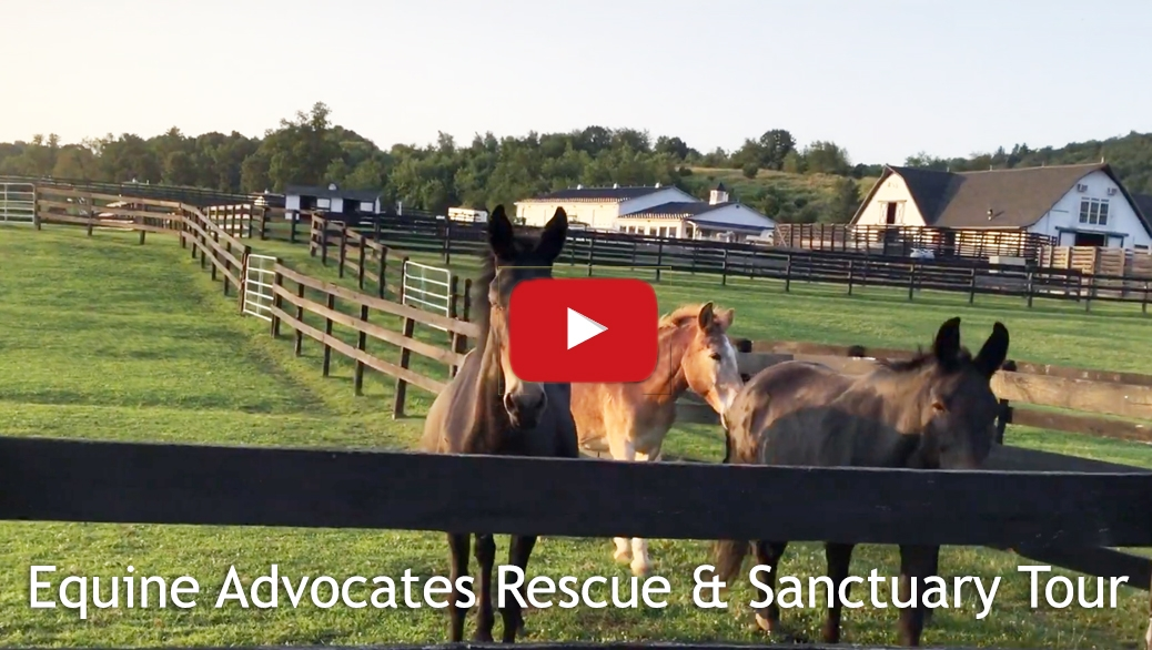 Equine Advocates Sanctuary Tour