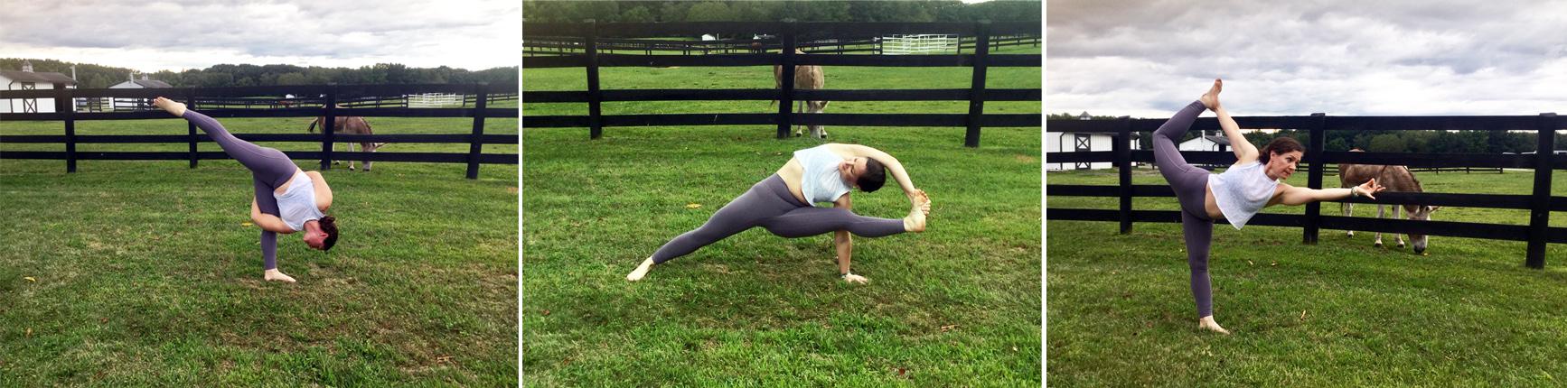 Yoga at Equine Advocates