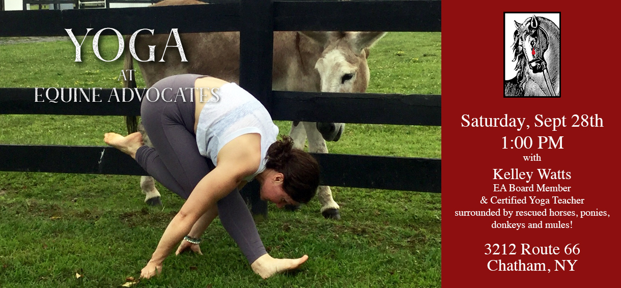 Yoga at Equine Advocates